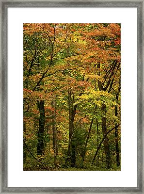 Autumn Trees North Carolina Framed Print by Terry DeLuco