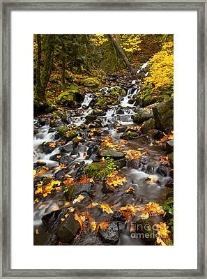 Autumn Tumbles Down Framed Print by Mike  Dawson