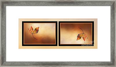 Autumn Up And Down 2 Framed Print by Kaye Menner