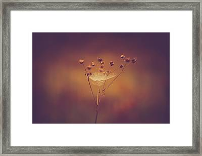 Autumn Web Framed Print by Shane Holsclaw