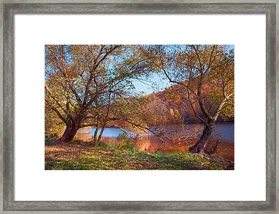 Autumnal Trees By The Lake Framed Print by Jenny Rainbow