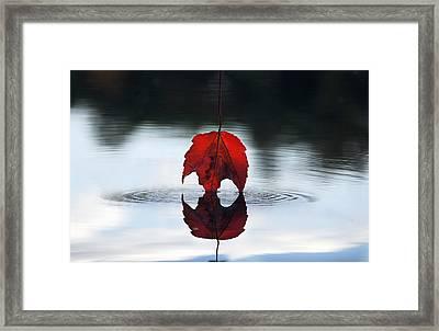 Autumns Final Descent Framed Print by William Carroll
