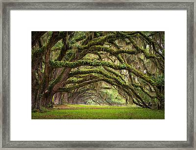 Avenue Of Oaks - Charleston Sc Plantation Live Oak Trees Forest Landscape Framed Print by Dave Allen