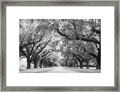 Avenue Of Oaks Charleston South Carolina Framed Print by Stephanie McDowell