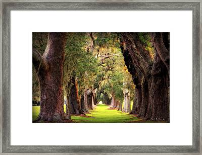 Avenue Of Oaks Sea Island Golf Club St Simons Island Framed Print by Reid Callaway