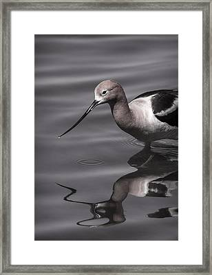 Avocet Water Reflections Framed Print by Vicki Stansbury