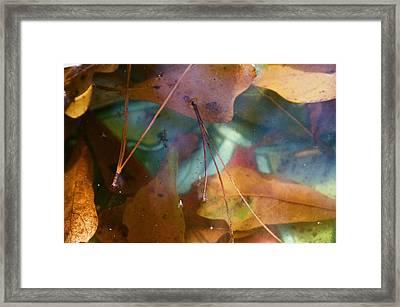 Awalk Framed Print by Ravi Lee
