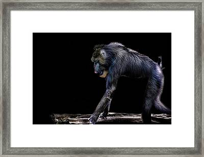 Baboon Framed Print by Martin Newman