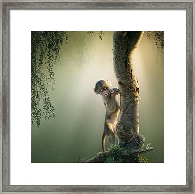 Baby Baboon In Tree Framed Print by Johan Swanepoel