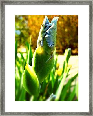 Baby Blue Ladybug Perch  Framed Print by ARTography by Pamela Smale Williams
