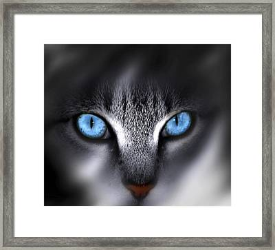 Baby Blues Framed Print by Cecil Fuselier