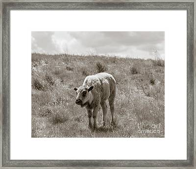 Baby Buffalo In Field With Sky Framed Print by Rebecca Margraf