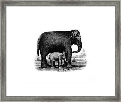 Baby Elephant T-shirt Framed Print by Edward Fielding