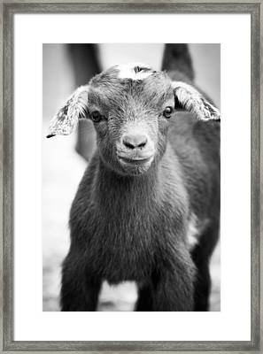 Baby Goat Monochrome Framed Print by Shelby Young