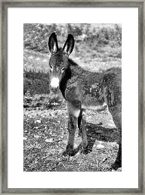 Baby Jenny 2 Framed Print by Jan Amiss Photography