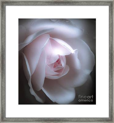 Baby Pink Rose Framed Print by Karen Lewis