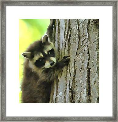 Baby Raccoon In A Tree Framed Print by Dan Sproul