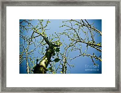 Baby Spring Tree Leaves 02 Framed Print by Ryan Kelly