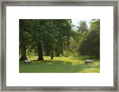 Back From The Meadow Framed Print by Angel  Tarantella