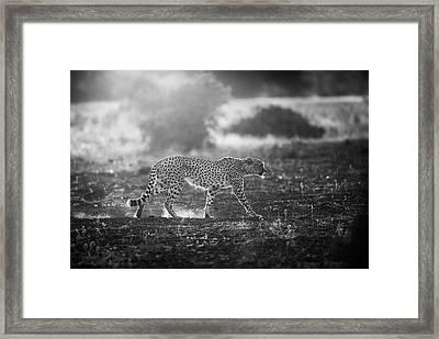 Backlit Cheetah Framed Print by Jaco Marx