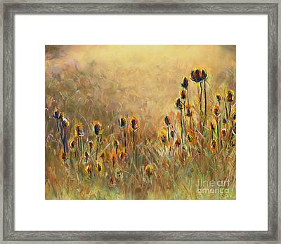 Backlit Thistle Framed Print by Frances Marino