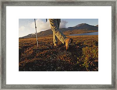 Backpacker Hikes Across Tundra In Logan Framed Print by Gordon Wiltsie