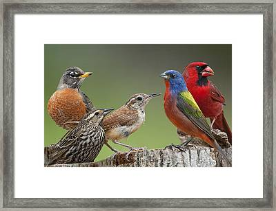 Backyard Buddies Framed Print by Bonnie Barry