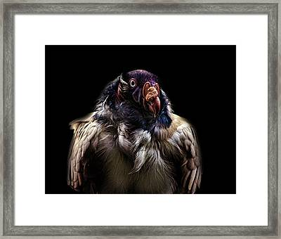 Bad Birdy Framed Print by Martin Newman