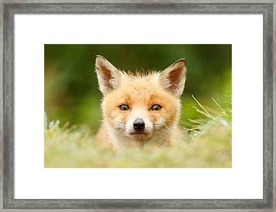 Bad Fur Day - Fox Cub Framed Print by Roeselien Raimond