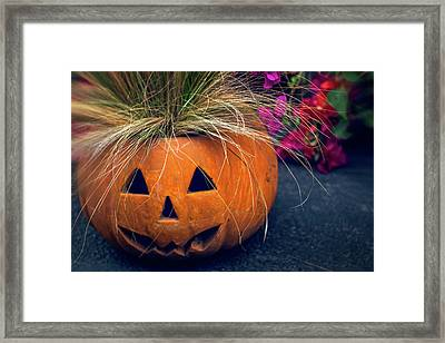 Bad Hair Day Framed Print by Terry Davis