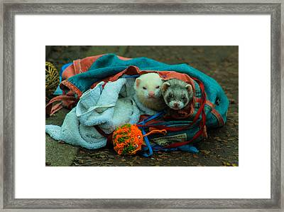Bag Of Ferrets Framed Print by Andy Blakey
