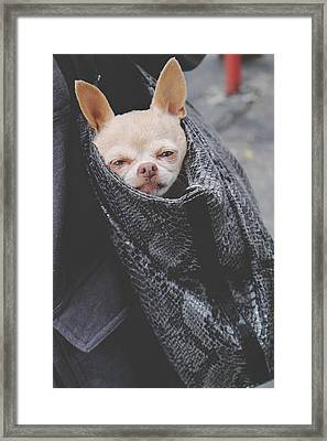 Bagged Framed Print by Laurie Search
