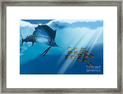 Bahama Beauty Framed Print by Corey Ford
