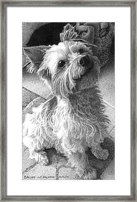 Bailey Framed Print by Lorraine Zaloom