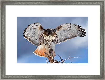 Balance Framed Print by Bill Wakeley
