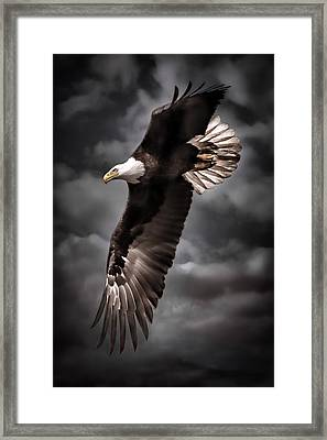Bald Eagle At Dusk D3876 Framed Print by Wes and Dotty Weber