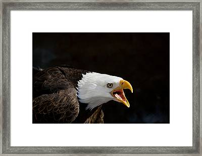 Bald Eagle Portrait 2 Framed Print by Laurie With