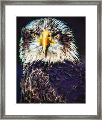 Bald Eagle Portrait Framed Print by Scott Wallace