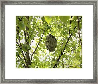 Bald-faced Hornets Nest Framed Print by Patti Whitten
