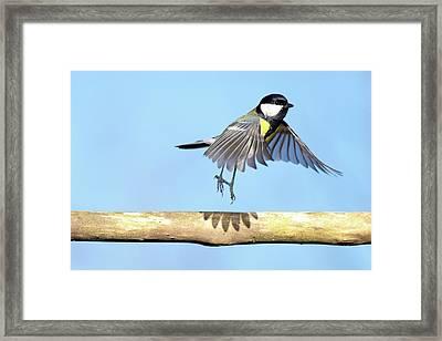 Ballerina Bird Framed Print by Marcel ter Bekke