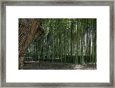 Bamboo 02 Framed Print by Michael Parks