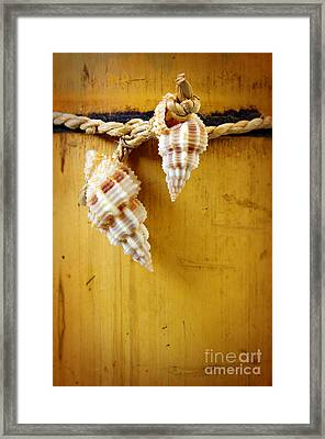 Bamboo And Conches Framed Print by Carlos Caetano