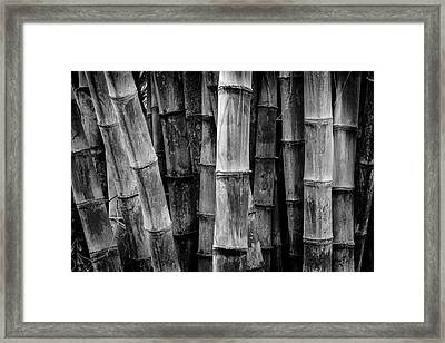 Bamboo Detail Framed Print by Kelley King