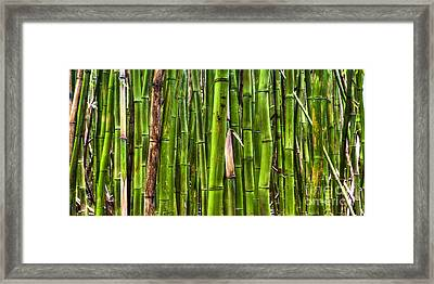 Bamboo Framed Print by Dustin K Ryan