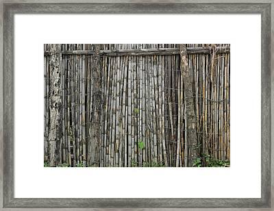 Bamboo Fence Framed Print by Robert Hamm
