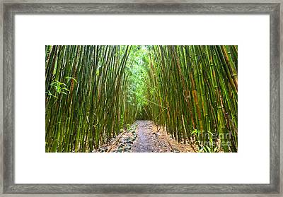 Bamboo Forest Trail Hana Maui 2 Framed Print by Dustin K Ryan