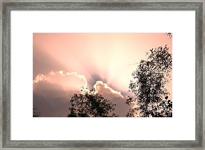 Bamboo Grove Framed Print by Yali Shi
