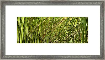 Bamboo Legacy Framed Print by Sun Gallery Photography Lewis Carlyle