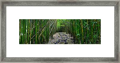 Bamboo Mana Framed Print by Sean Davey