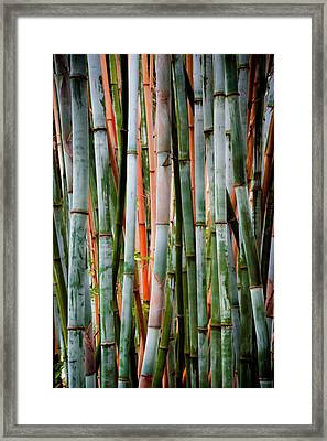 Bamboo Seduction II Framed Print by Karen Wiles